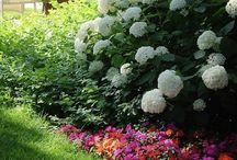 Gardenstuff-Hydrangeas / What's not to love? / by Eileen Myers