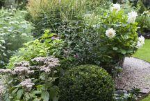 Trädgård.