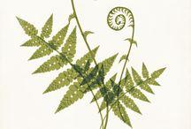 rośliny inspiracje