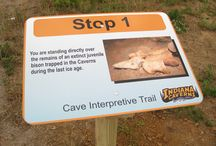 Interpretation / Sharing stories is important at Indiana Caverns.  Karst, the ice age, Binkley Cave-all are important themes in our exhibits.