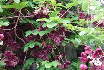 Planten voor tuin op het oosten