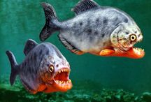 Zoot Piranha
