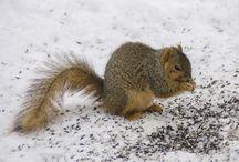Winter in Steuben County, IN!