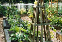 Puutarha / Vinkkejä ja oivalluksia puutarhaan