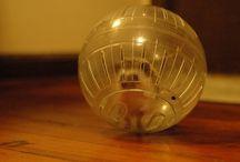Our Future Hedgehog