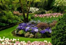 Kvety,záhony