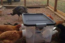 Home made chicken feeder
