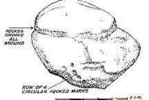 Cupulites