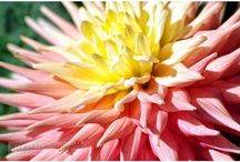 FLOWERS / Photos of flowers and garden design