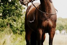 Häst är bäst