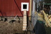 Farm livin' is the life for me / My dream farm and critter condos  / by Nicole Pennell