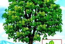 lesné plody