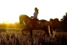 Equine Photography / by Michaella Leahy