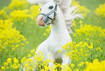 Must <3 Horses / Horse Pics & Facts that we love www.organizedbarn.com