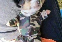 Puppy / Belli