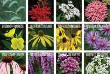 Ontario Native Plants