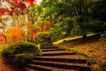 Luonto ja värit