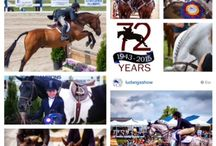 Equestrain Events / Equestrian is big in Chester County and draws visitors from all over the country!