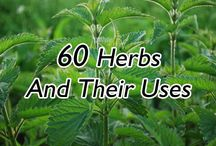 Herbs, spices &NATURAL healing