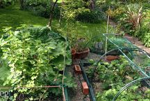 Planning A Garden? / Thinking about planning an easy first time garden, here are a few ideas to ease you into it gradually...