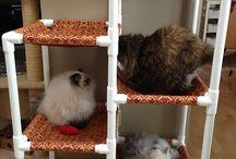 ideias #cats