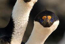 Birds / by Anneke Sober