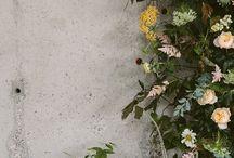 Flores e afins