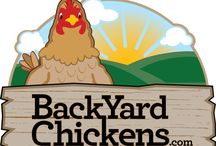 Backyard Chickens / by Jennifer Hough