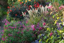 Colour and plant combination