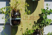 Herbs Home Garden