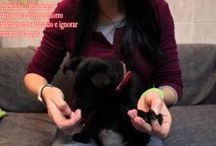 Puppy education and training / Videos of puppy education, classes and training. Puppy classes, bitting, nipping, chewing, socialization, all issues adressed.