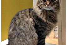La dieta di Bea / Questa bellissima gatta è una nuova arrivata nella grande famiglia Pet's Planet. Lei si alimenta con Sensinary, la linea di alimenti dedicati ai gatti più sensibili.