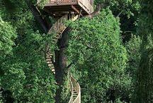 Domy na stromech