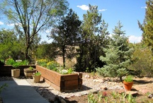 Backyard Ideas / by Kristine Reed
