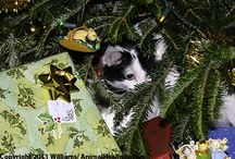 Pets @ Holidays / Different ideas for pets to help keep them happy and safe
