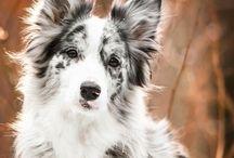 Doggo:)