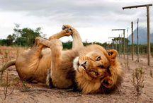 Funny Animals!