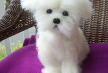 Sweet Maltese / by Sandi May