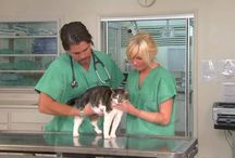 Feline Urinary Tract Disease / Your cat has trouble at the litter box?