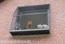 Katzen fenster