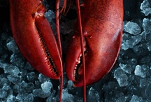 Lobster Imagery / Beautiful photos or designs featuring lobsters