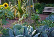 Herb gardens to visit