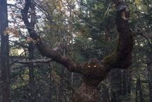 Mother Nature / tree monster