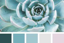color insp