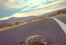 En Route Traveler: Joshua Tree Highlights   / Highlight in and around Joshua Tree National Park in California