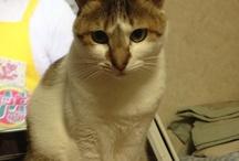 Cat Cat Cat ! / Cat Cat Cat ! / by Fumi Ume