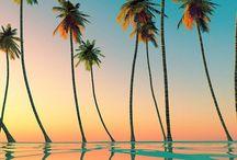 • Summer Vibes