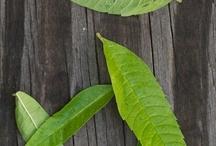 Ingredients / Schaut her, was wir in unserem TeeFee Kindertee verarbeiten