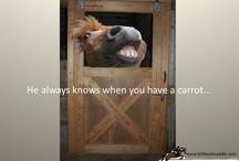 Harold Hero Horse