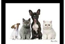Pets ;)